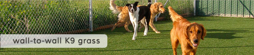 Wag-N-Train Boarding | Training and Daycare in Grand Forks